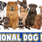 National Dog Day 2019 Quotes And Cute Photos Celebrating Best Friend